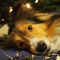 kenai4weihnachten2014