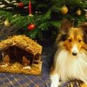 kenaiweihnachten2014
