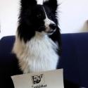 felitherapiehund