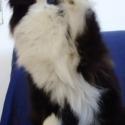 felitherapiehund2