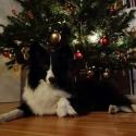 feliweihnachten2014