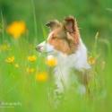 hunde-5