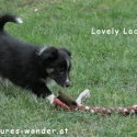 lacey2_20jaenner2015