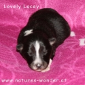 lacey_6tage1