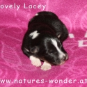 lacey_6tage2