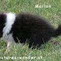 marlon1_21jaenner2015