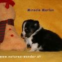 marlon2_tag29