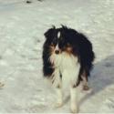 oliv-jannur16-08