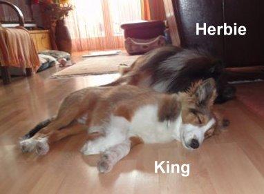 KingHerbieApril2014