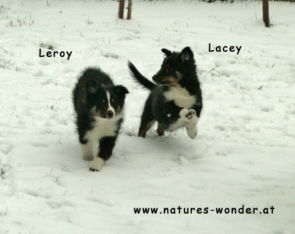 Leroy_Lacey