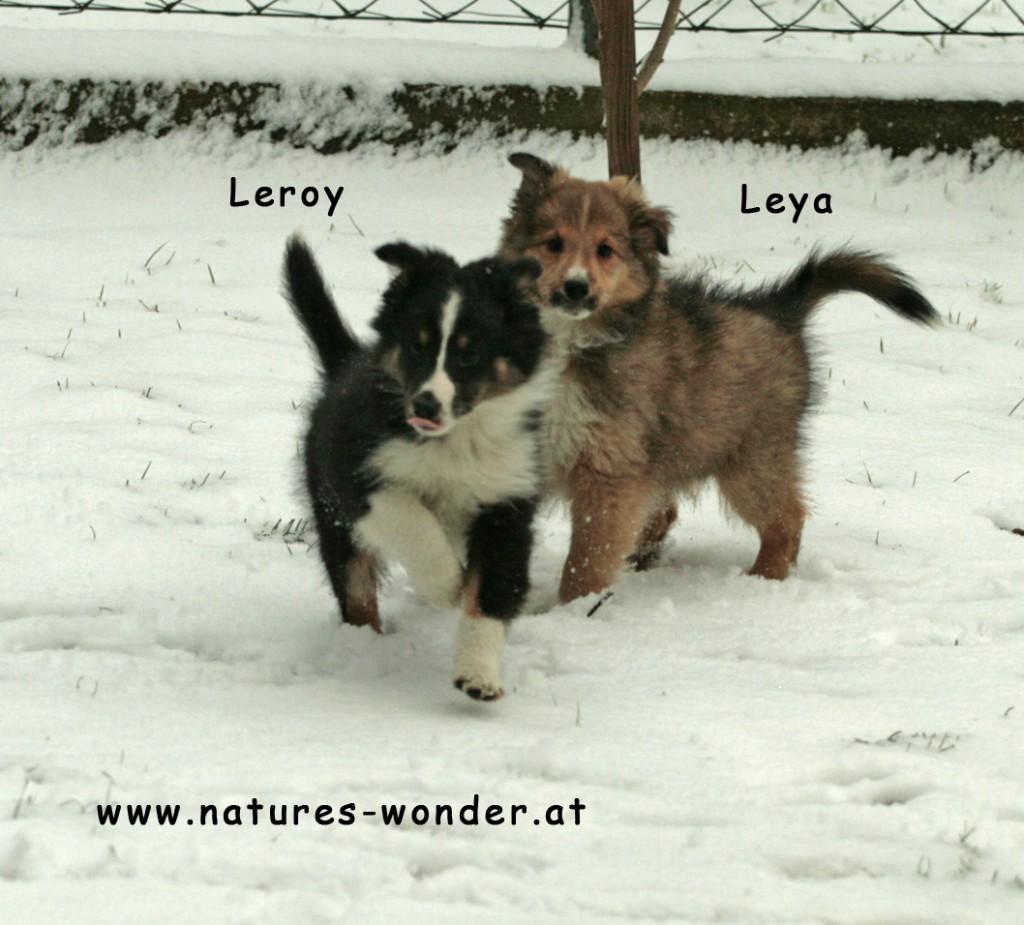 Leroy_Leya